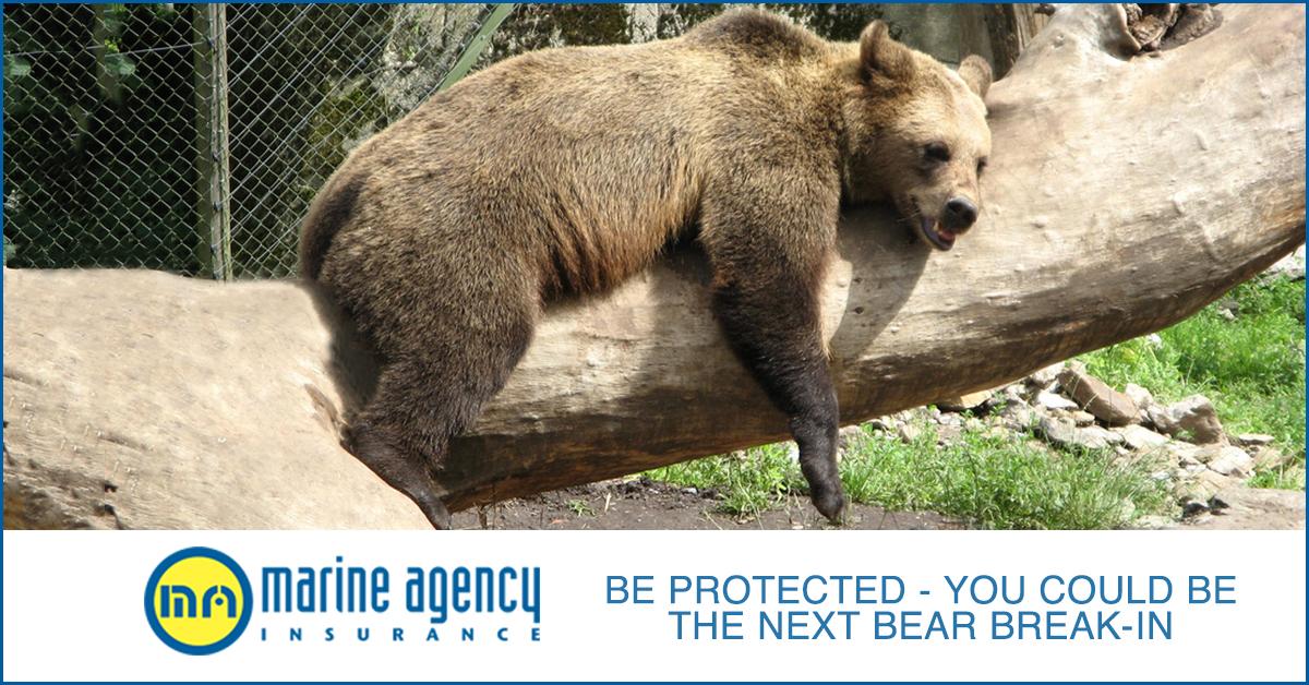 bear-break-in